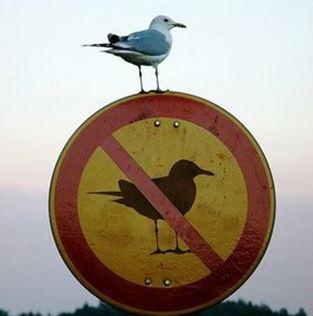 romper las reglas